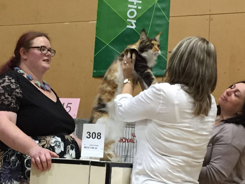 Hope at Best in Show